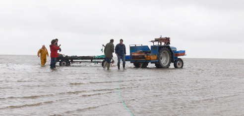 Morecambe Bay Shrimp Fishing